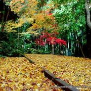 紅葉 今熊野観音寺