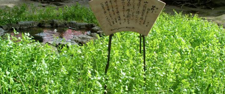 源氏物語と平清盛がクロスする新春イベント