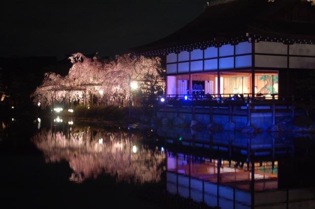 桜花見の楽しみ方Part1妖艶夜桜