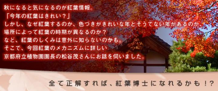 京都紅葉検定、だれかバージョンアップしませんか。