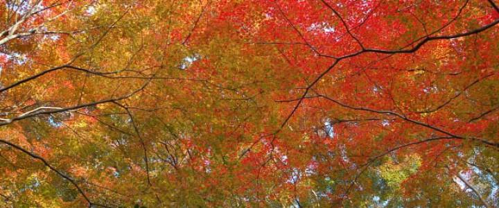 哲学の道界隈の紅葉と秋の特別公開 霊鑑寺