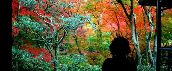 直指庵 ・嵐山・嵯峨野を歩いても、ここまでは来ない! / 秋の特別公開