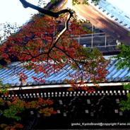 紅葉  南禅寺 法堂