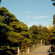 京都御所秋季一般公開    京都御所 小御所 御池庭
