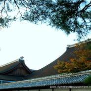 京都御所秋季一般公開    京都御所 御常御殿