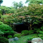京都御所秋季一般公開    京都御所 御常御殿 御内庭