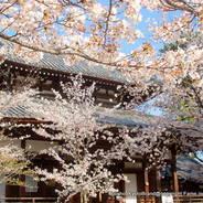 花見  立本寺 日像 日審