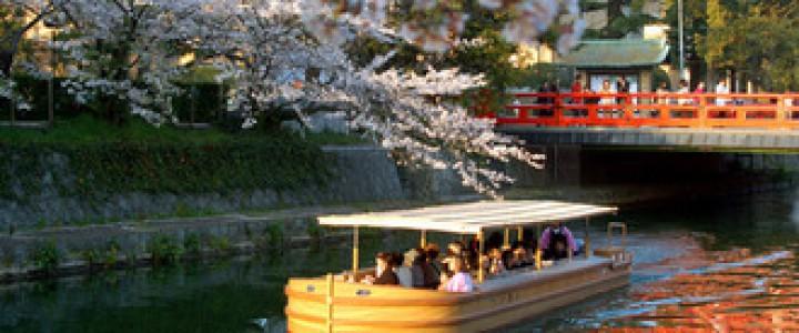 岡崎桜回廊3