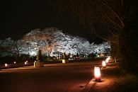 20130327京都府立植物園