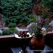 観月茶会 中秋の名月 妙心寺 退蔵院 花園天皇 無因宗因