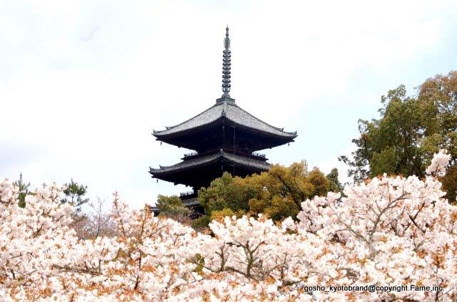 お多福桜の仁和寺の寺紋は「二引きに桜」である。