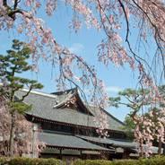 花見 観桜 旧武徳殿 京都武道センター