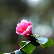 観梅 花見  下鴨神社 糺の森