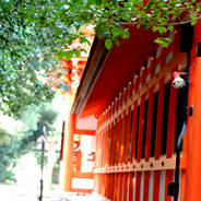 観梅 花見  下鴨神社
