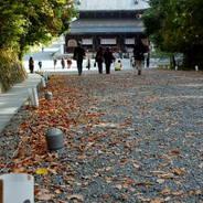 紅葉 泉涌寺 仏殿