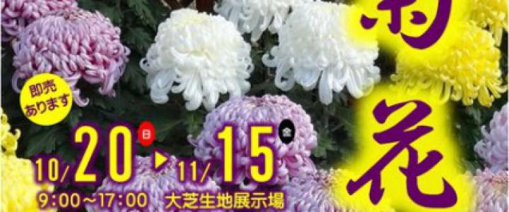 shokubutuen2013-kikkatenP