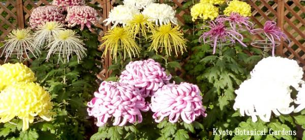 10/28現在 京都府立植物園