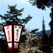 花見 醍醐寺