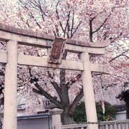 花見 観桜 妙見宮