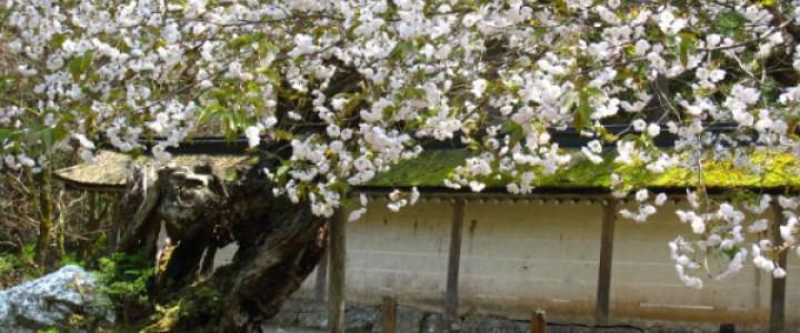 080415_mikurumagaesi_oyako_nidai_MG_1819