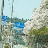 花見 周山街道