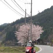 花見 ドライブ 周山街道