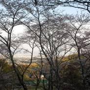 桜 花見 勝持寺 西行法師
