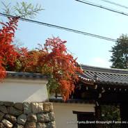 紅葉 紅葉狩 花暦 東福寺 霊源院 龍泉和尚