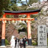 桜 花見 観桜 宇治川さくらまつり 世界遺産 宇治上神社