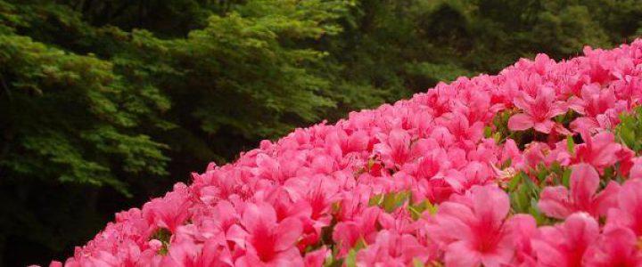 京の水無月花暦