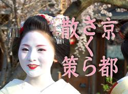 50ヵ所以上の京都桜の名所、名木をまとめました。