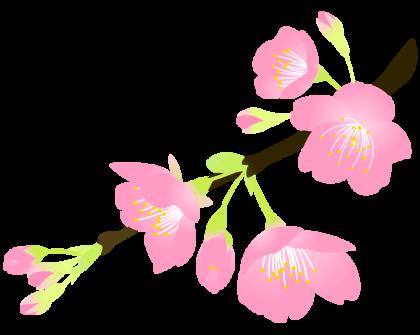 桜の開花情報2015