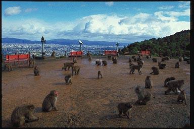 嵐山モンキーパーク いわたやま