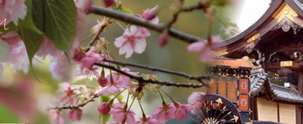 桜の開花情報2016