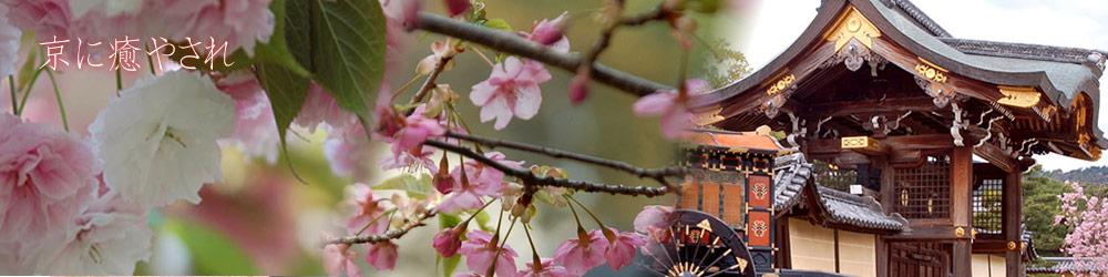 桜の開花情報2017