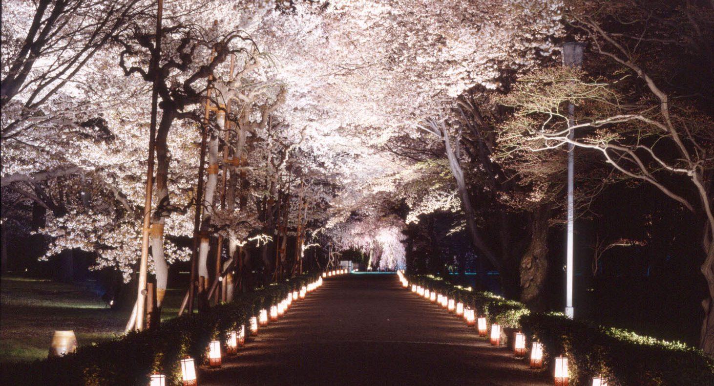 二条城桜まつり2017