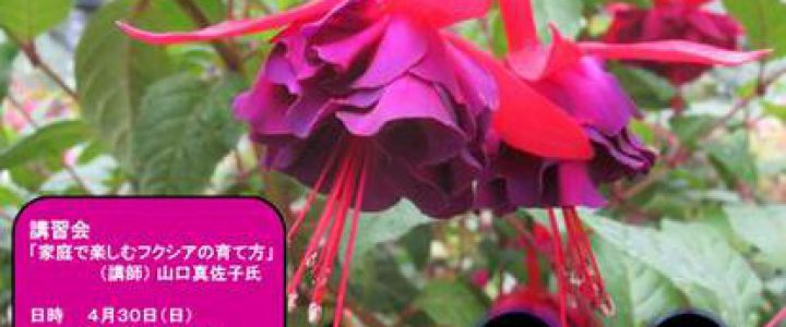 GW☆第26回フクシア展ほか / 京都府立植物園