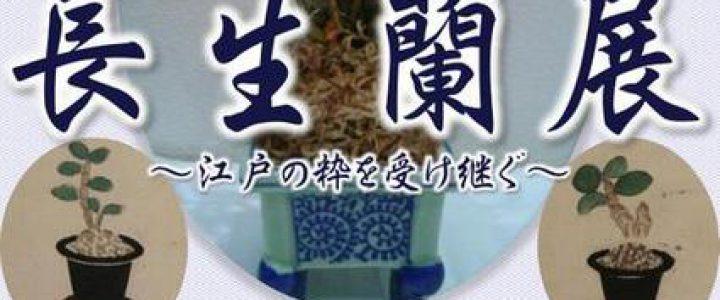 第24回長生蘭展 /母の日無料開園