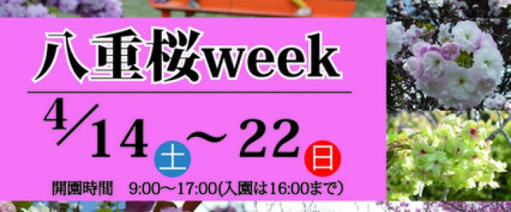 八重桜week☆宇治市植物公園