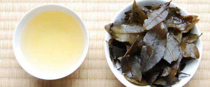 無鄰菴「日本茶を知る」vol.3番茶