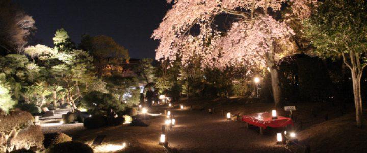 知恩院 春のライトアップ2020(中止)