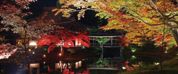 京都ミステリー紀行の紅葉狩り