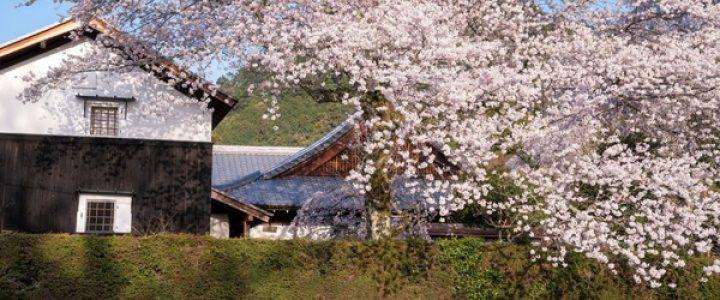 比叡山やくばらい散歩・春