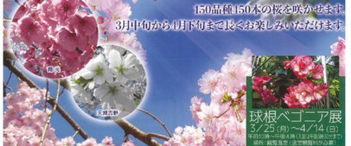 府立植物園 桜ライトアップ