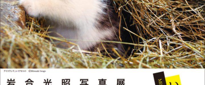 岩合光昭写真展 こねこ 彡  美術館「えき」KYOTO
