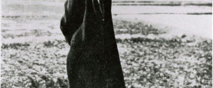 セカイから見た日本を知る–第5回『宮沢賢治』