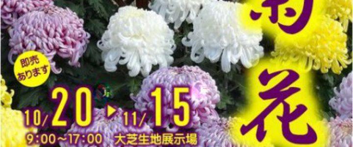 菊花展☆京都府立植物園