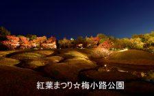 梅小路公園 「紅葉まつり」2019