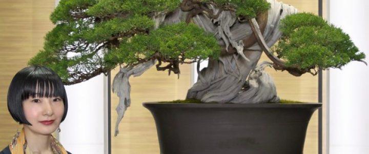 連続講座「日本盆栽」小さな巨木BONSAI