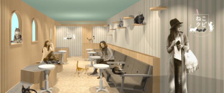 タピオカ専門店×猫カフェ,オープン